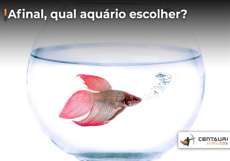 Aquário redondo de vidro com peixe de coloração avermelhada dentro