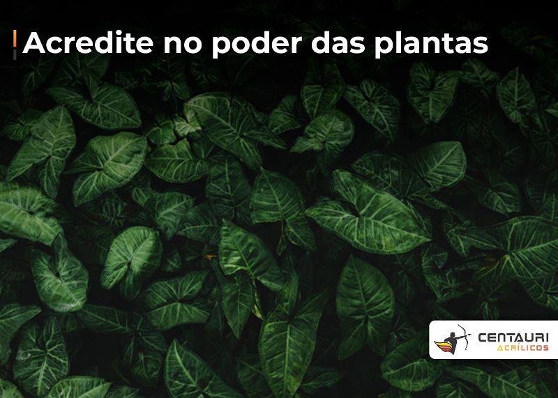 Imagem toda cheia com plantas verde escura